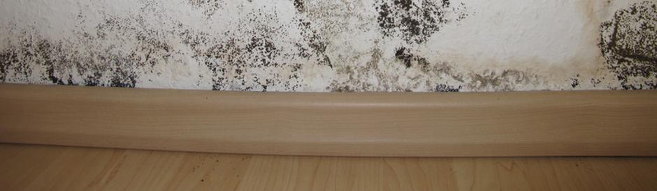 schimmelbeseitigung fenselau bautenschutz. Black Bedroom Furniture Sets. Home Design Ideas